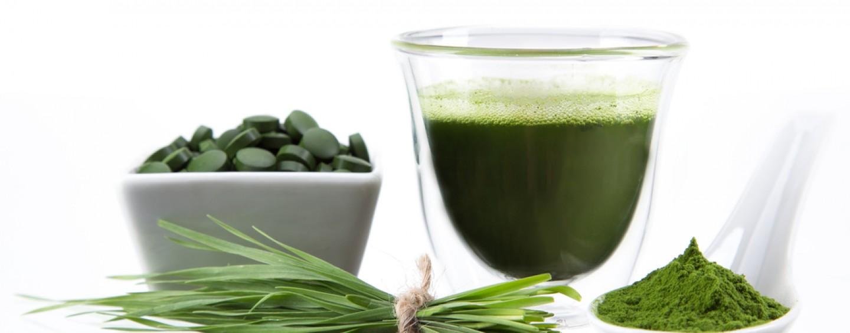 Die Chlorella Alge – Inhaltsstoffe und deren positive Eigenschaften