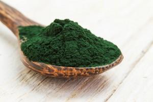 Spirulina nicht Alge sondern Bakterium