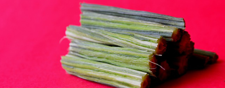 Moringa – Wirkung des Wunderbaumes