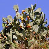 Kaktuswasser – einfach nur Hype oder was steckt dahinter?