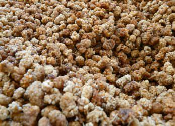 Maulbeeren kaufen – Was passt am besten zu mir?