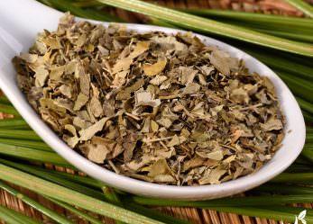 Moringa Tee – Kraft aus dem Baum des Lebens